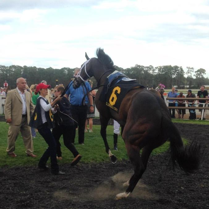 Tepin in paddock, Tampa Bay Downs