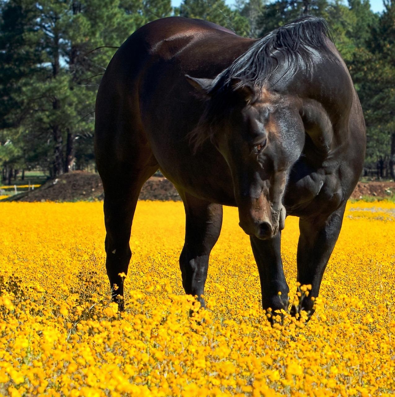horse-419156_1280