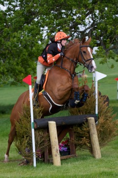 horse-930942_1280