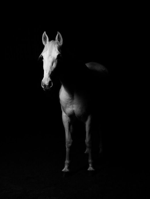 White horse in shadows