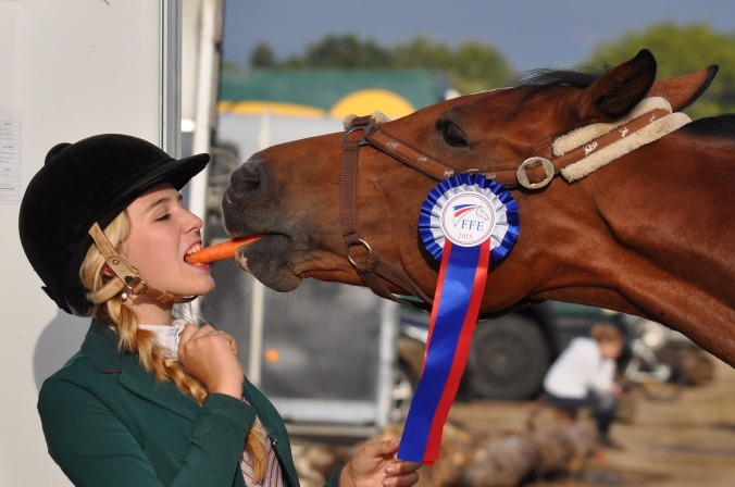 Show horses enjoy advancements in sports medicine found through racing-funded studies.